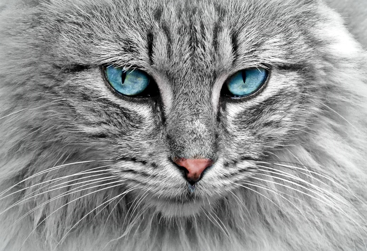 さくらねことは?不幸な野良猫を減らそう!