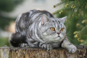 野良猫ママの子育て論|野生のメス猫はどんな生活をしているの?