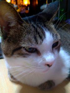 老猫(高齢猫)死の前兆~亡くなるまでの記録|飼い主が最後できること