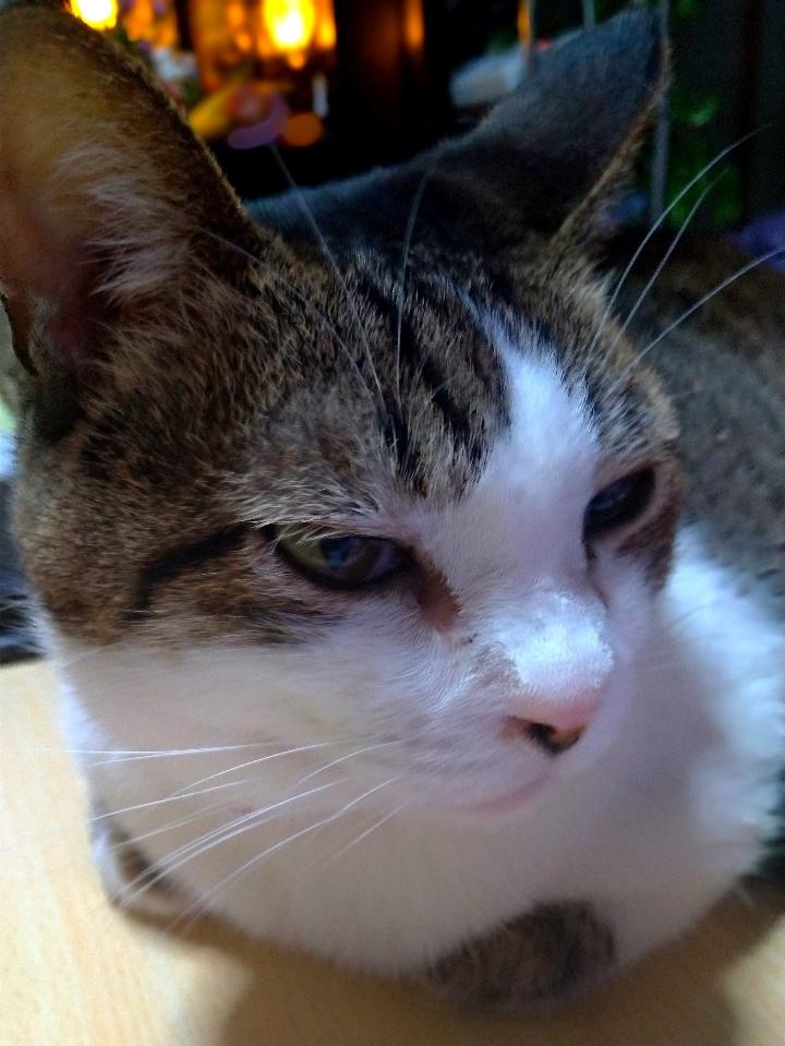 高齢猫看取りブログへのお問い合わせより|ゆるりねこblog
