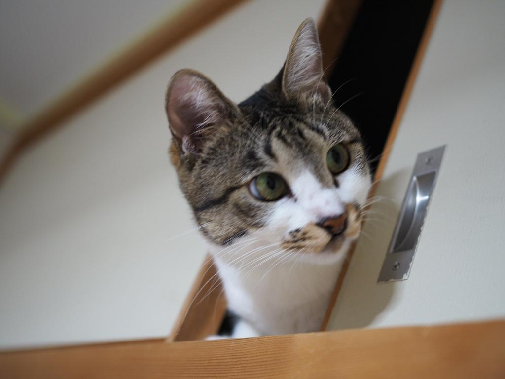 ノネコは家猫と同じで慣れる!実は家猫より飼いやすかった!
