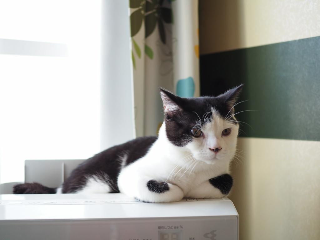 猫は喜怒哀楽の「哀」が無いって本当?飼い主が死んでも悲しくないの?