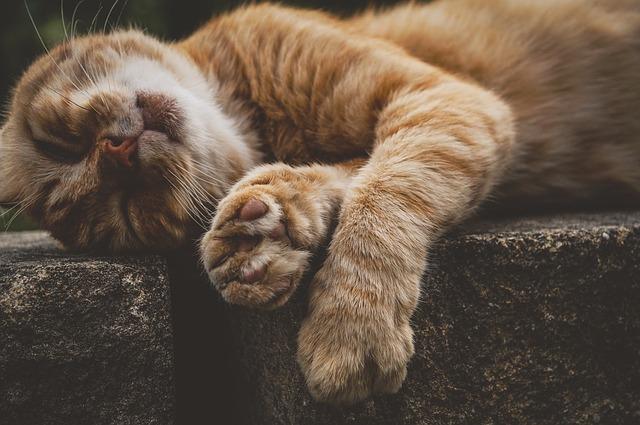 先住猫たまちゃんはいつも不機嫌!新入り猫が嫌い!