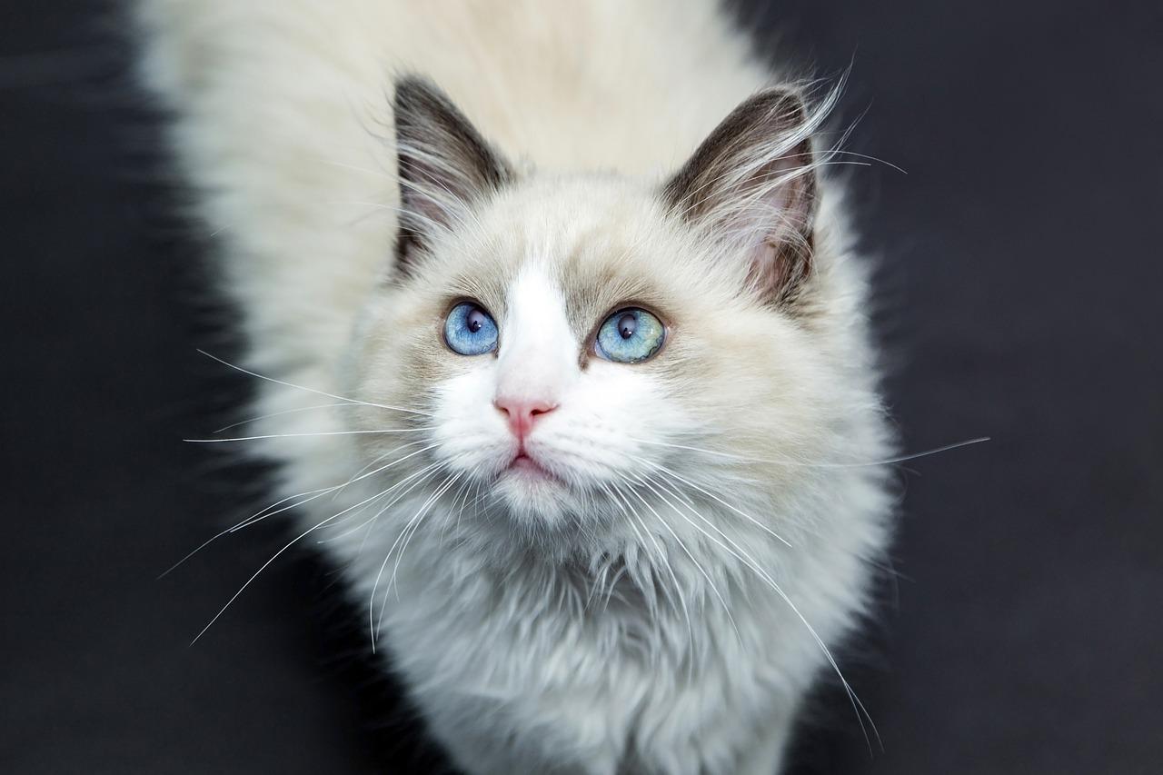 初めて猫を飼う!猫はどこで手に入れるの?