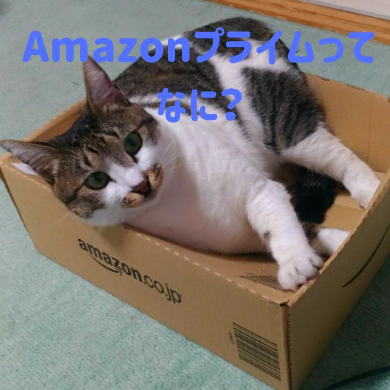 Amazon(アマゾン)プライム会員って何?スマホ初心者向けに詳しく解説します!