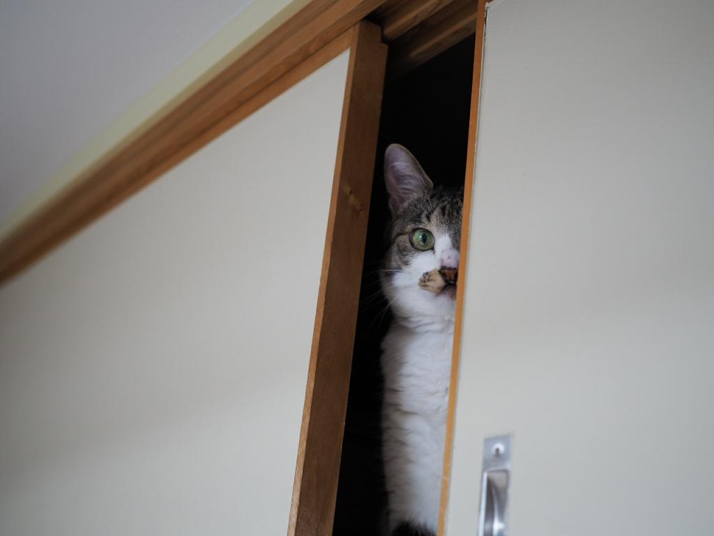 猫型監視カメラ|チコちゃんのキャットスキャンをうけるのね!