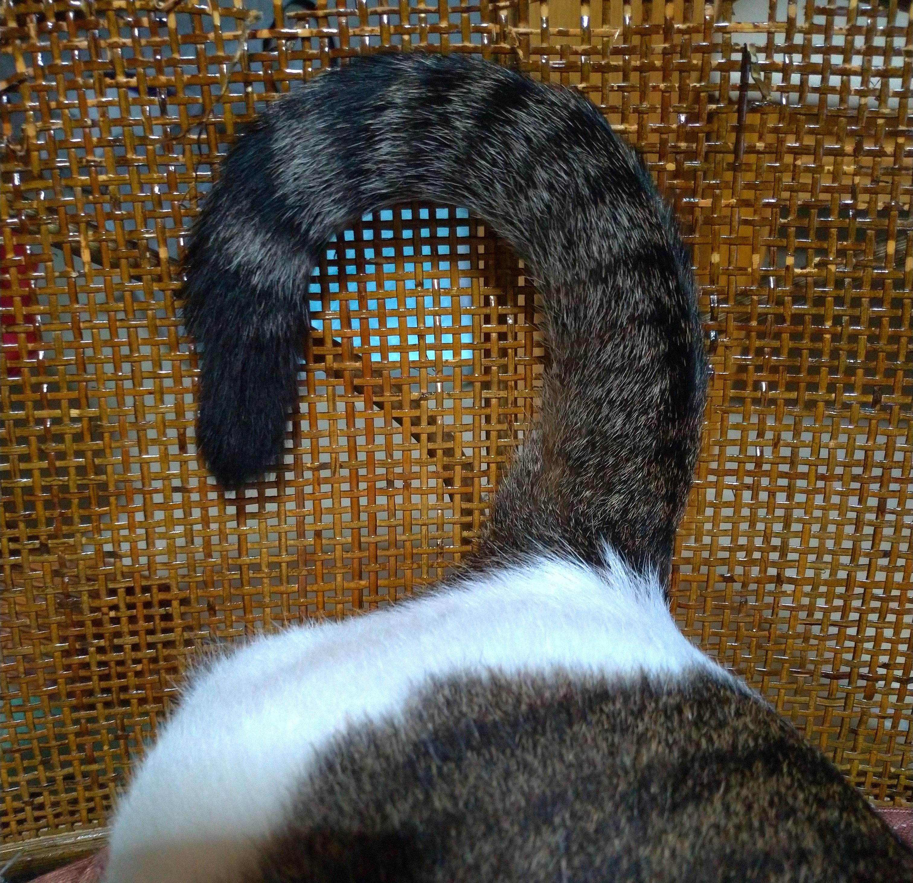 愛猫たまちゃんキャットフードを喉に詰まらす!