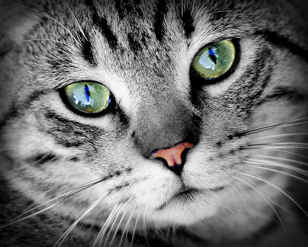猫は死期が近づくと姿を消すのは本当?飼い猫と飼い主のエンジェルタイムの大切さ