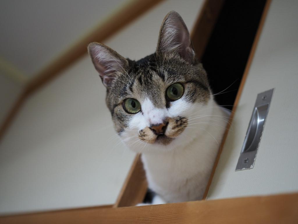 元ノネコのチコちゃん|実は嫉妬深い猫だった!