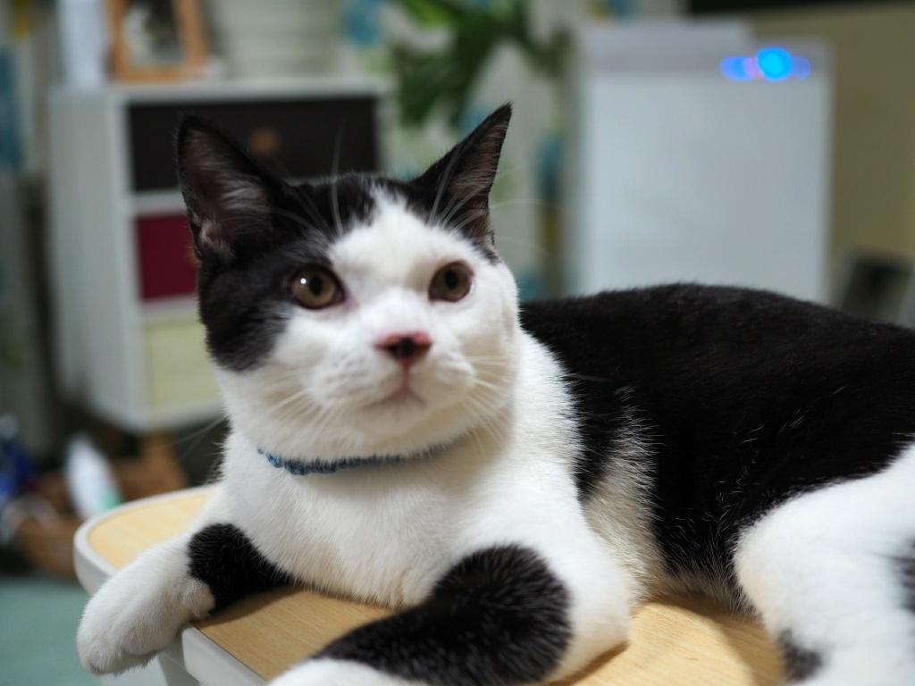 猫の病気は予測することができる|郵送するだけ簡単な遺伝子検査!