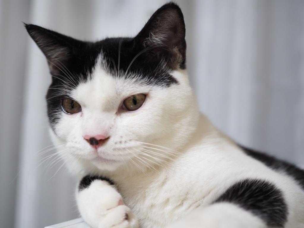 新入り猫たまちゃんはプラスチックフェチ!冷蔵庫とたまちゃん