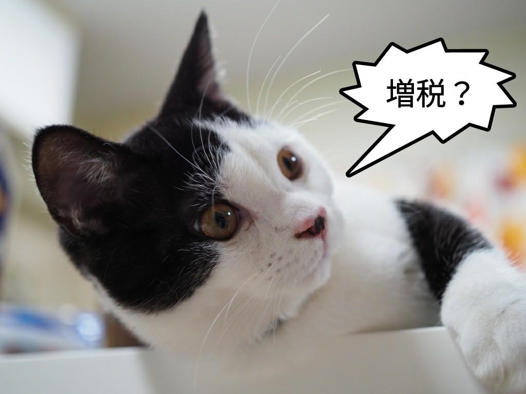 ペットフード・用品は令和元年10月から税率10%の値上がり|これから先の増税や災害に備えよう