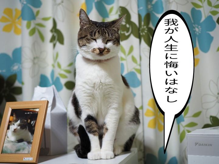 家猫「たまちゃん」と元ノネコ「チコちゃん」の災害に対する温度差!