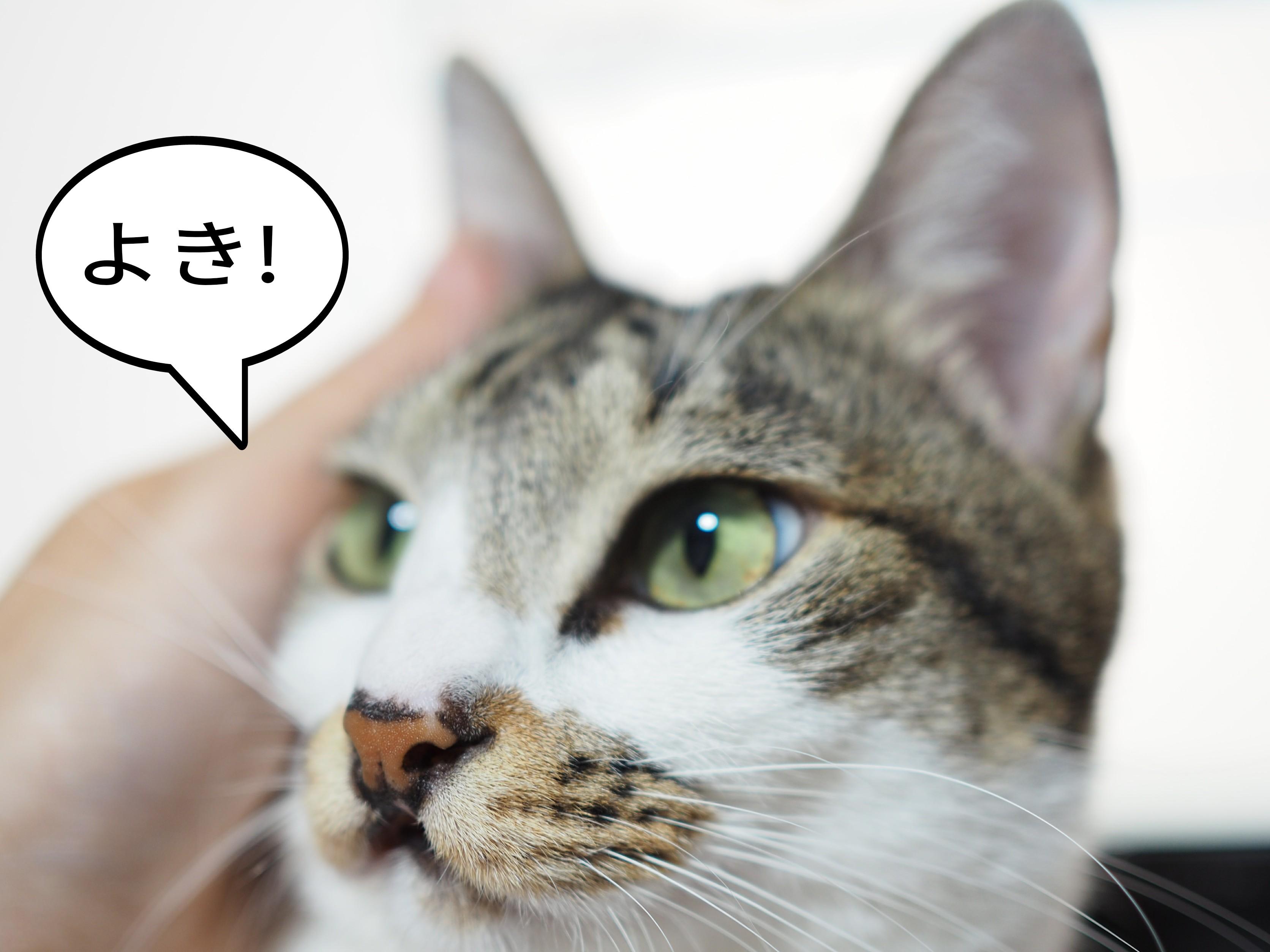 飼い主チコちゃんよりパソコンが好きなの?ゆるりねこblog