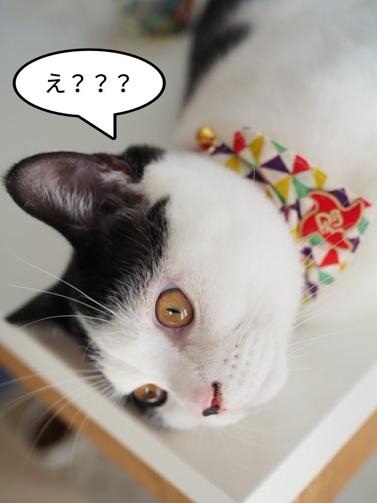 ロイヤルカナンのベテリナリーダイエット猫用食事療法「満腹感サポートドライ」が韓国産になるよ!