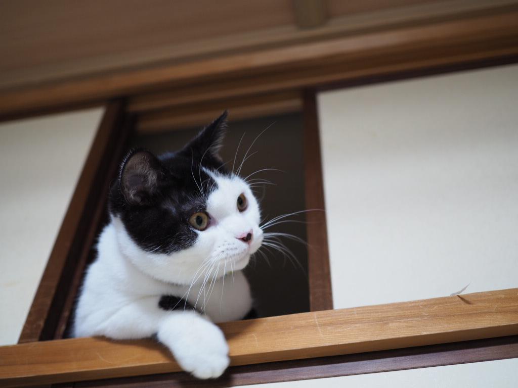 初めて猫を飼うのに何を用意すればいいの?疑問点を徹底解説!