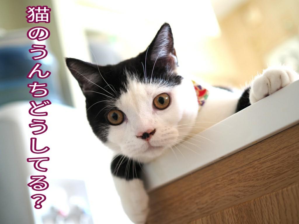 猫砂やウンチの処分方法は?初めて猫を飼う