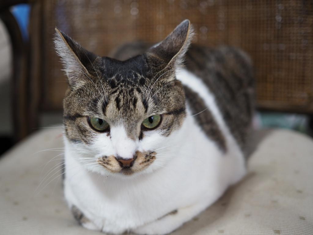 「猫が爪きりを嫌がる」場合どうすればいいの?我が家のチコちゃんとたまちゃんの場合