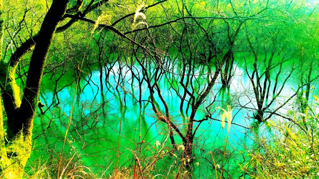 川なのに温泉?【和歌山の川湯温泉】大人も子供と楽しめる無料の遊び場