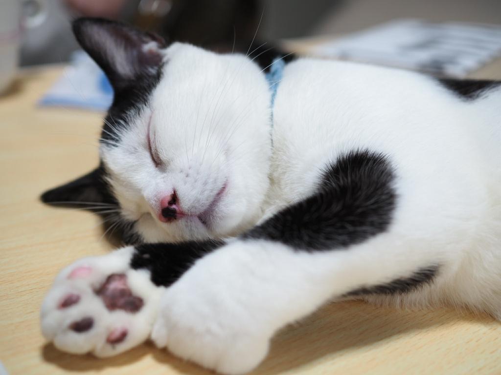 可愛いだけじゃない猫の肉球|多機能なのにゃ