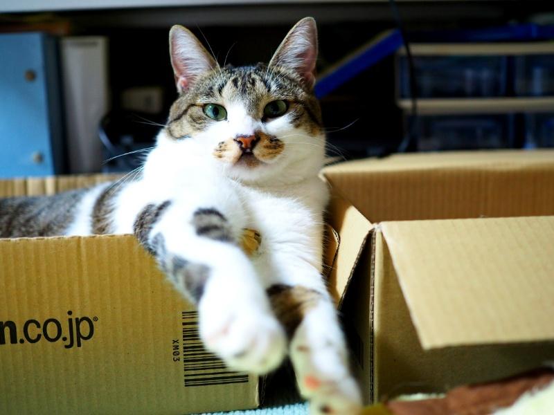 飼い猫が高齢になったら?シニアフードの切り替えは大切【7歳からシニア猫の仲間入り】