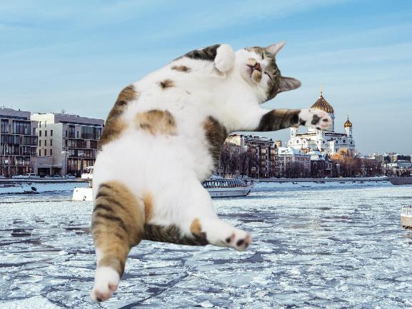 猫転落・脱走防止対策!マンションのベランダは超危険【フライングキャット症候群】