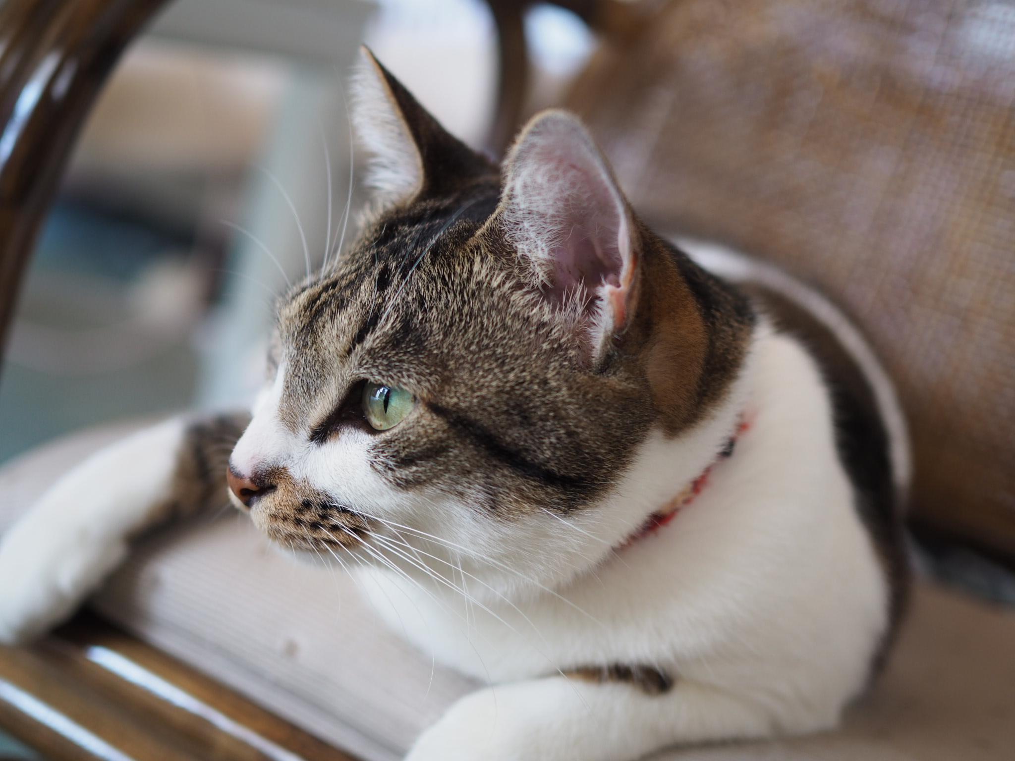 猫は飼い主なんか待たへんねん!でも心配なのね