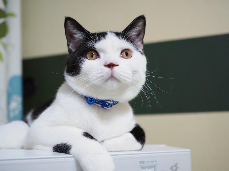 猫が好むのはエサより深い愛情!飼い主を捨てる猫たち