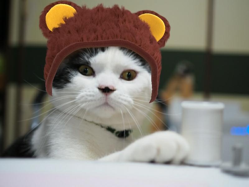 猫も飼い主も盛れる最高のアプリはSNOWアプリ!