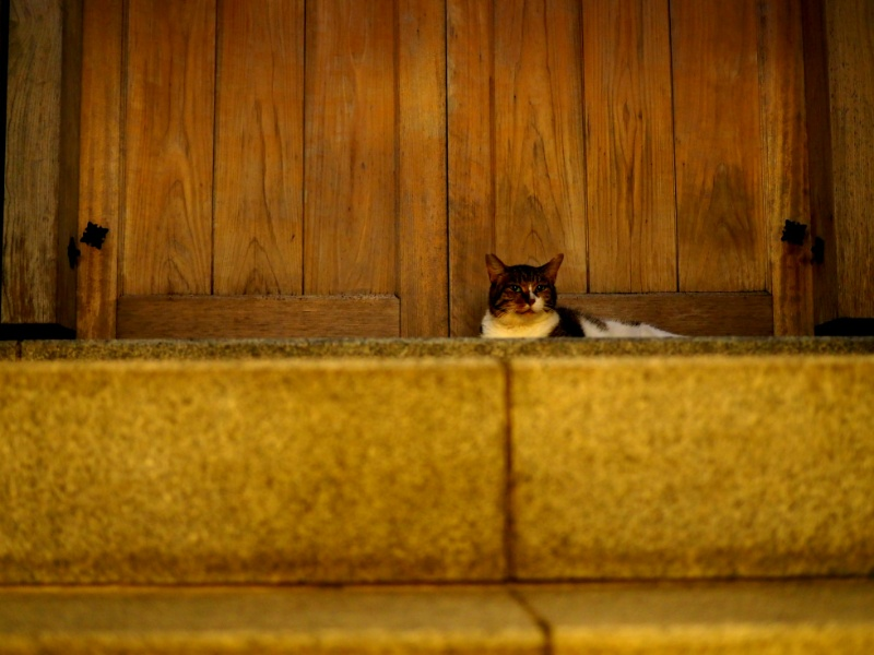 日本の水掛不動さんの猫 Japanese Mizukakefudo's cat