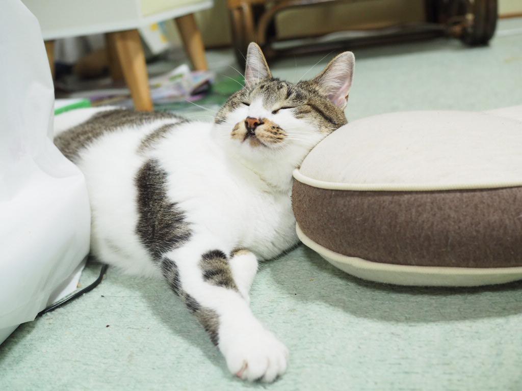 高齢猫の最期に立ち会えることは幸せ!猫が死をもって教えてくれること【老いまで愛しい老猫たち】
