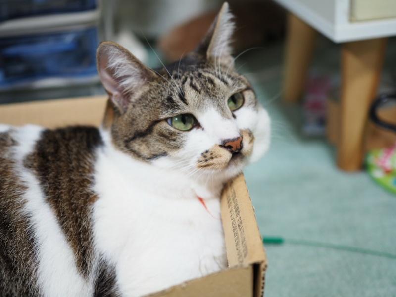 猫が高齢になってから家具の位置を変えると危険!