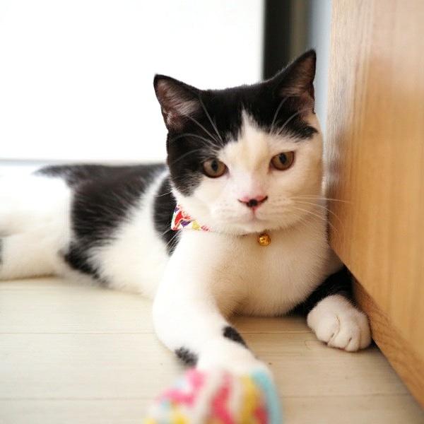 猫グレインフリーにこだわる必要はない?50%以上の飼い主は本当のことを知らない