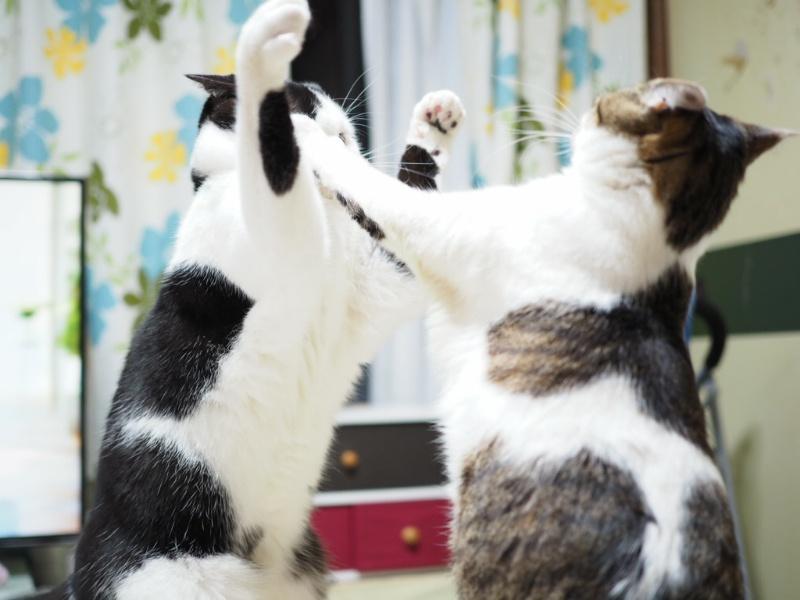 効果的猫ピタは効かない?猫の粗相の最終手段!元ブリーダーおすすめの消臭剤猫ピタ
