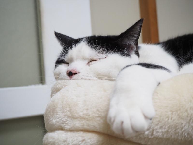 高齢猫には水分補給がとても大切!腎臓病とお水