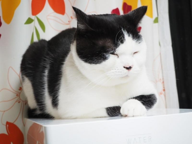 猫には喜怒哀楽の【哀】がないのは本当なのか?我が家のたまちゃんの場合