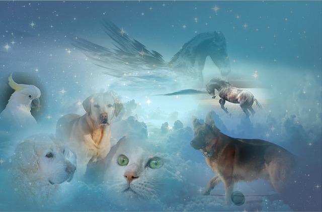 高齢猫たまと父|猫が飼い主を看取ったら?