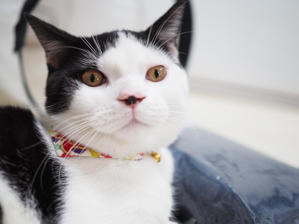 高齢猫介護用品 元ブリーダーおすすめ便利グッズ「老猫初めての介護どうすればいい?」