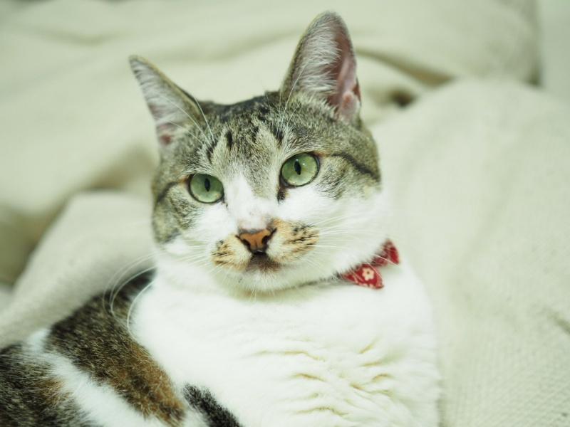 治療しない選択で後悔する飼い主|高齢猫の看取り