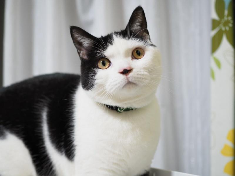 猫を看取るとき役立つ本4選|元ブリーダーおすすめ